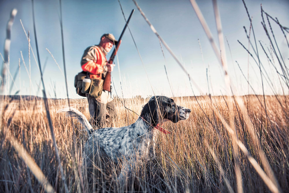Fall Hunting & Fishing: Pheasant survey shows big uptick in bird numbers