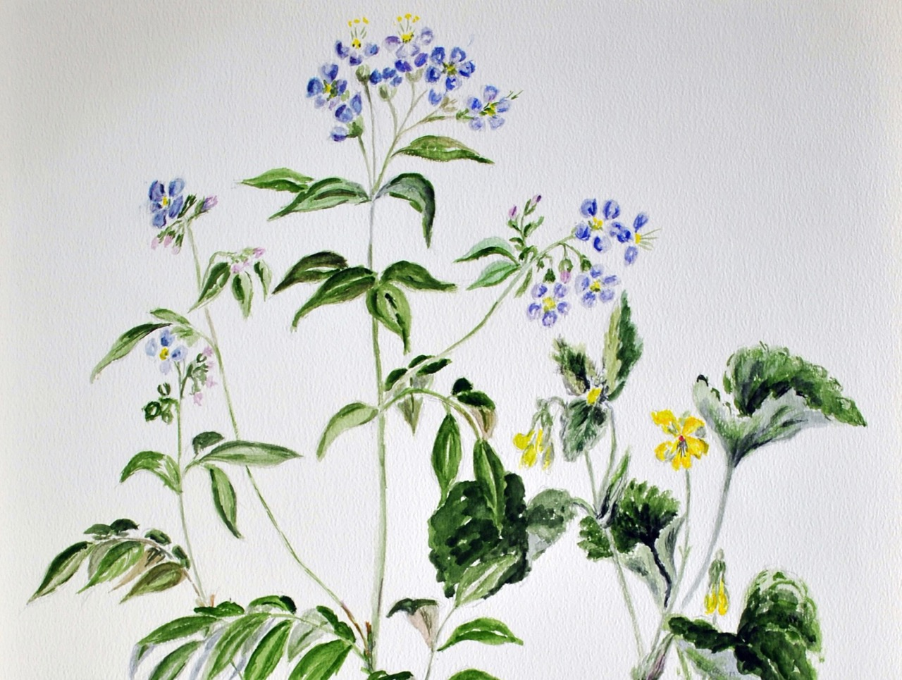 Watercolor wildflowers on display at CCAC in November