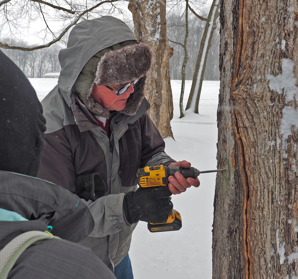 Tree-tapping time at Tosanak